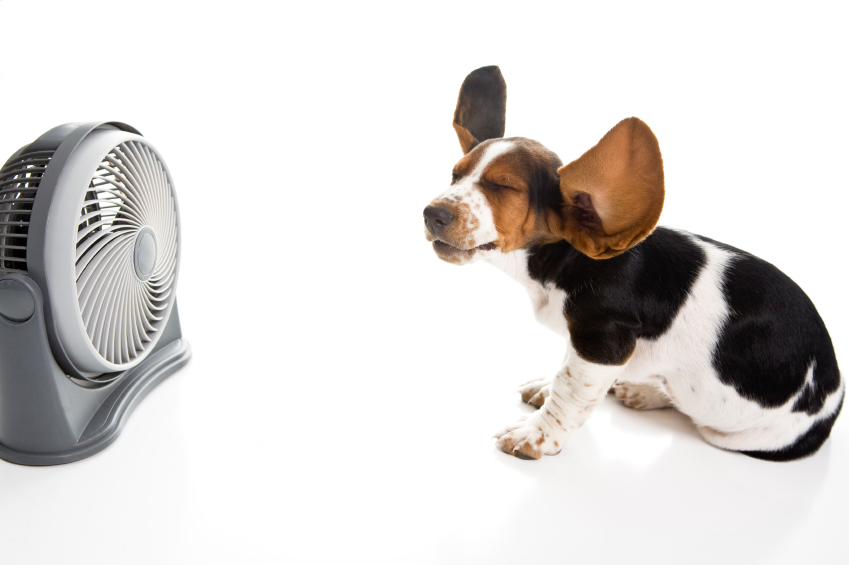Dog With Fan : Preventing dog heat stroke dogsquad