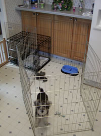 Exercise pen for Puppy Potty Training