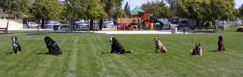 Dog Obedience Training in Concord provide off-leash class