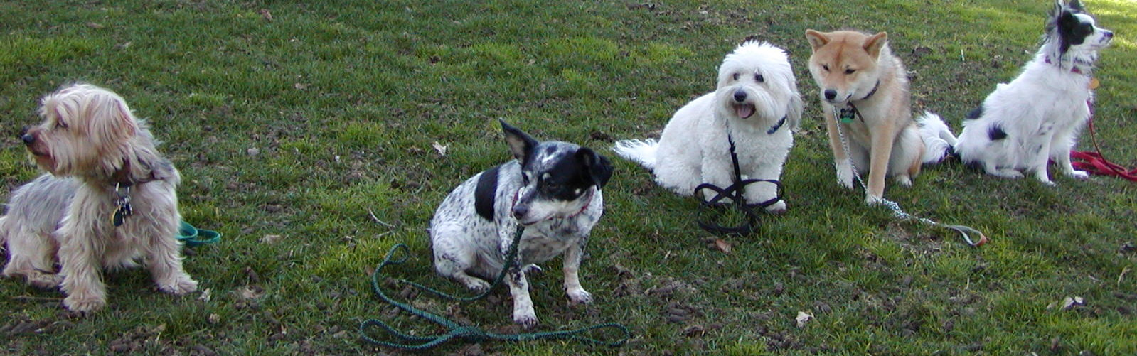 Dog Obedience - Teaching a Stay