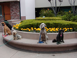 In-home puppy & dog training in Oakland