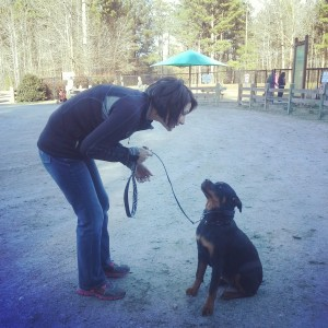 Oakland dog training programs for dogs and owners!