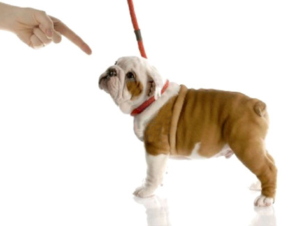 What Is Positive Punishment In Dog Training